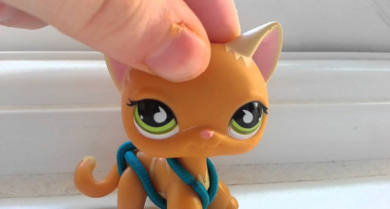 lps short hair cat